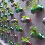 658365-Os-jardins-verticais-são-ótimas-opções-para-plantar.