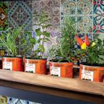 follow-the-colours-casa-claudia-cozinha-lata-ervas-horta