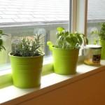 sprout-pencils-plant-your-pencil-alecrim-coentro-hortelc3a3-sc3a1lvia-salsa-tomate-horta-em-casa-plantar-ervas-em-casa-como-plantar-em-casa-plantar-ervas-e-temperos-em-casa-21-680x345
